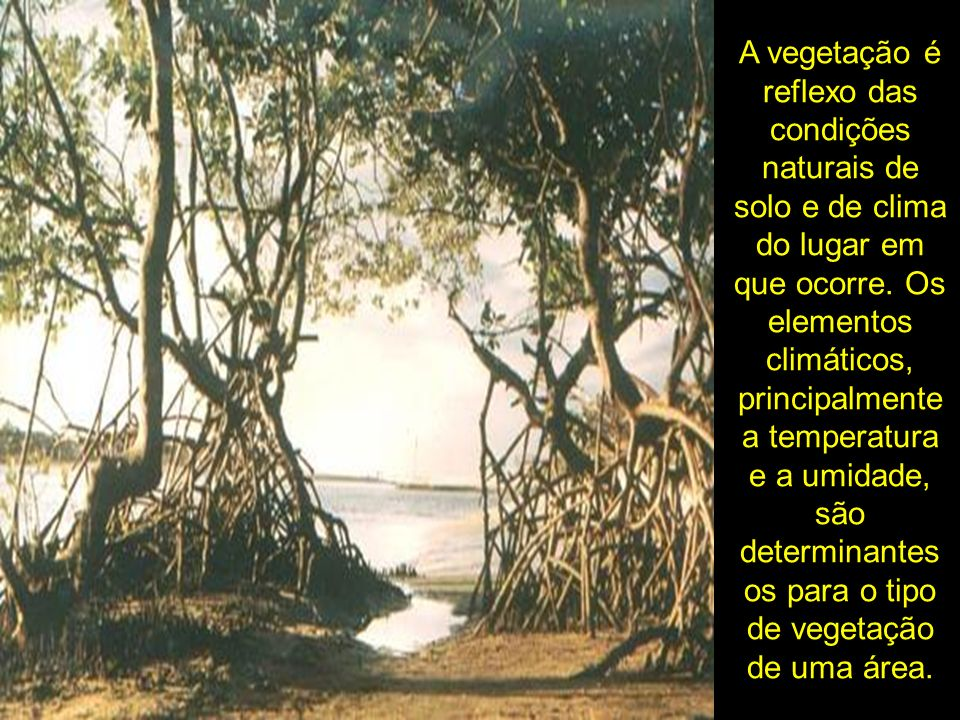 A vegetação é reflexo das condições naturais de solo e de clima do lugar em que ocorre. Os elementos climáticos, principalmente a temperatura e a umid