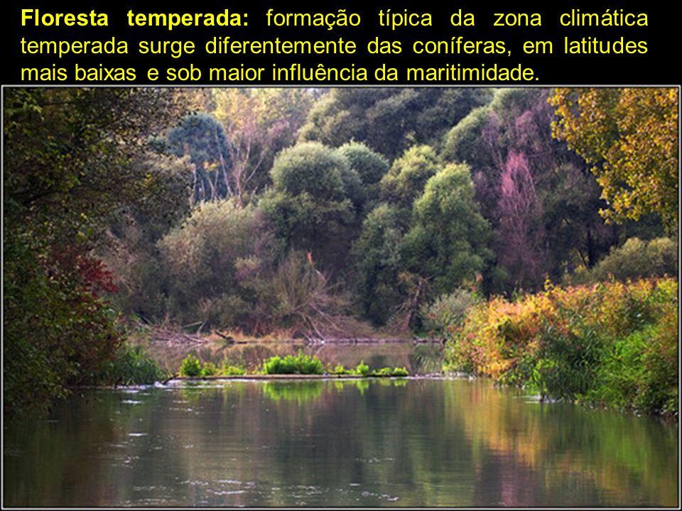 Floresta temperada: formação típica da zona climática temperada surge diferentemente das coníferas, em latitudes mais baixas e sob maior influência da