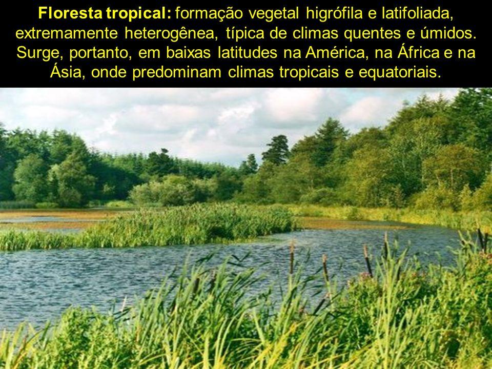 Floresta tropical: formação vegetal higrófila e latifoliada, extremamente heterogênea, típica de climas quentes e úmidos. Surge, portanto, em baixas l