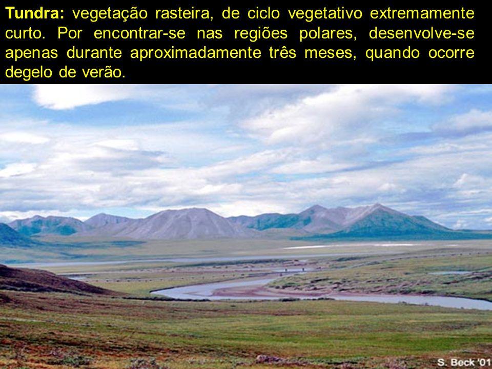 Tundra: vegetação rasteira, de ciclo vegetativo extremamente curto. Por encontrar-se nas regiões polares, desenvolve-se apenas durante aproximadamente