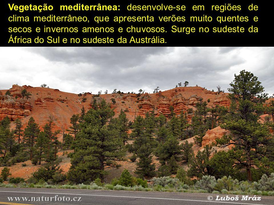 Vegetação mediterrânea: desenvolve-se em regiões de clima mediterrâneo, que apresenta verões muito quentes e secos e invernos amenos e chuvosos. Surge
