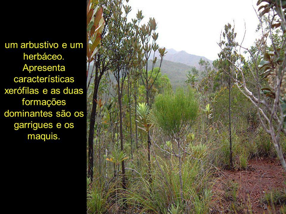 um arbustivo e um herbáceo. Apresenta características xerófilas e as duas formações dominantes são os garrigues e os maquis.