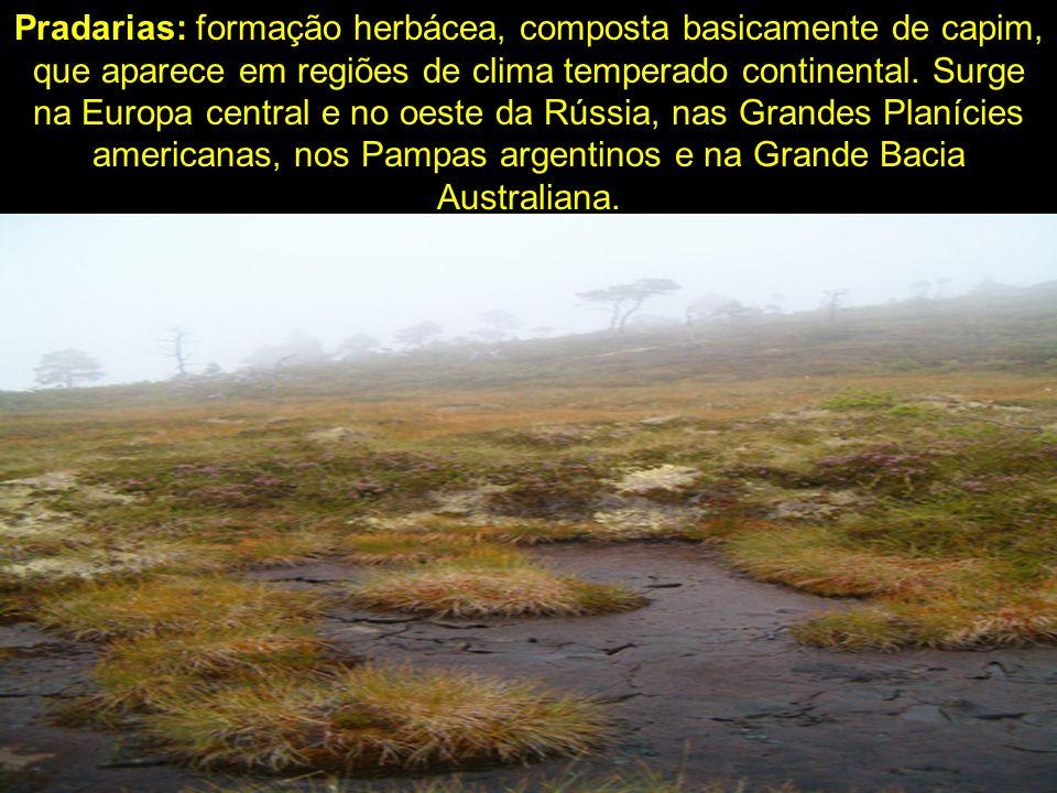 Pradarias: formação herbácea, composta basicamente de capim, que aparece em regiões de clima temperado continental. Surge na Europa central e no oeste