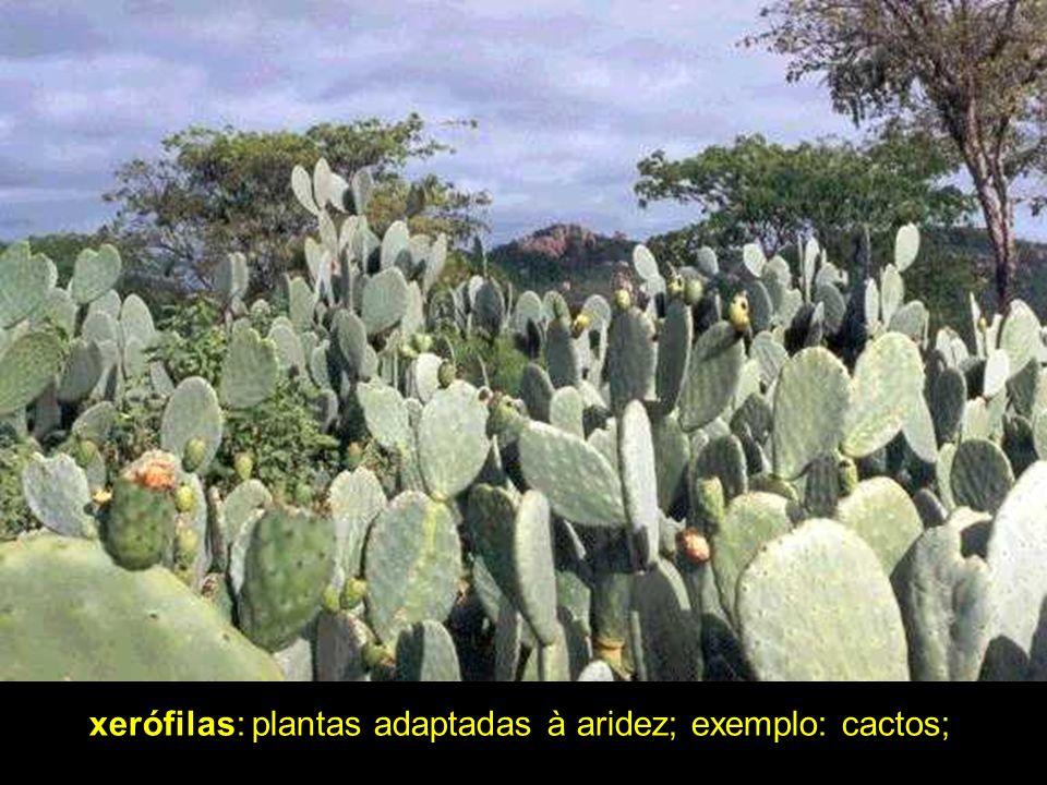 É a formação mais rica em espécie do planeta, possuindo um enorme e ainda em grande parte desconhecido banco genético ou biodiversidade.