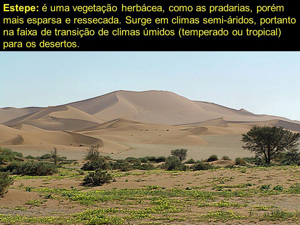 Estepe: é uma vegetação herbácea, como as pradarias, porém mais esparsa e ressecada. Surge em climas semi-áridos, portanto na faixa de transição de cl