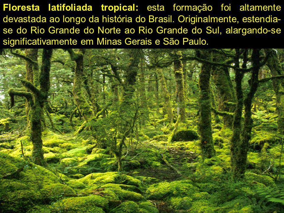 Floresta latifoliada tropical: esta formação foi altamente devastada ao longo da história do Brasil. Originalmente, estendia- se do Rio Grande do Nort