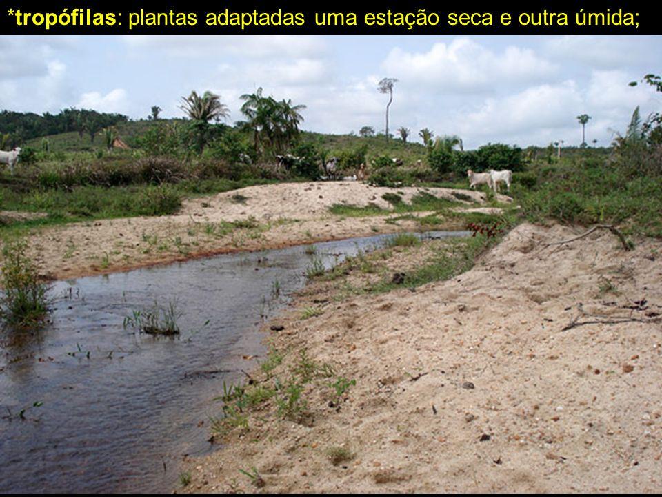 *tropófilas: plantas adaptadas uma estação seca e outra úmida;