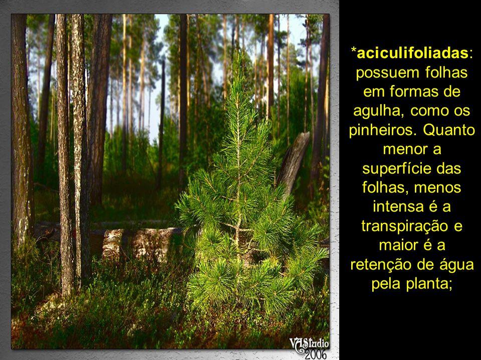*aciculifoliadas: possuem folhas em formas de agulha, como os pinheiros. Quanto menor a superfície das folhas, menos intensa é a transpiração e maior
