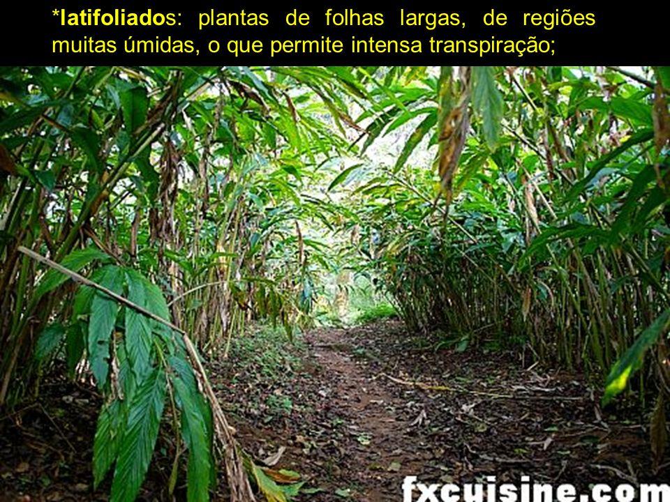 caducifólias: plantas que perdem as folhas em época muito frias ou secas do ano.