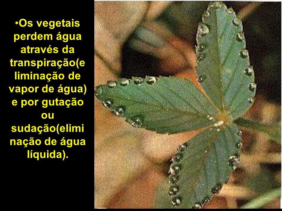 Os vegetais perdem água através da transpiração(e liminação de vapor de água) e por gutação ou sudação(elimi nação de água líquida).