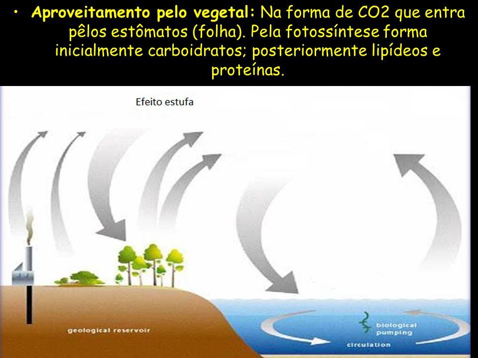 Aproveitamento pelo vegetal: Na forma de CO2 que entra pêlos estômatos (folha). Pela fotossíntese forma inicialmente carboidratos; posteriormente lipí