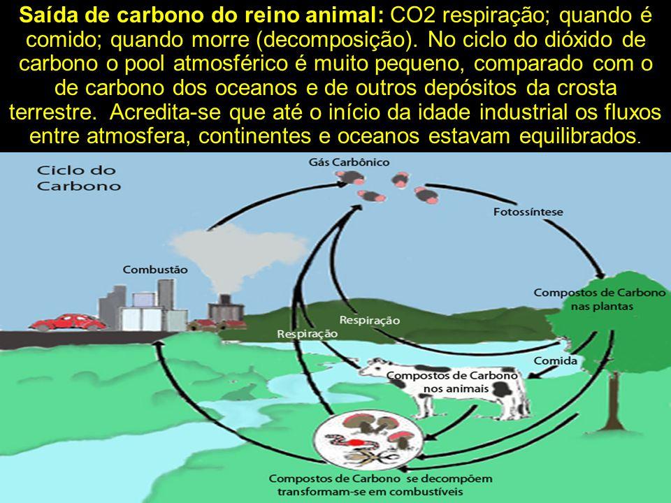Saída de carbono do reino animal: CO2 respiração; quando é comido; quando morre (decomposição). No ciclo do dióxido de carbono o pool atmosférico é mu