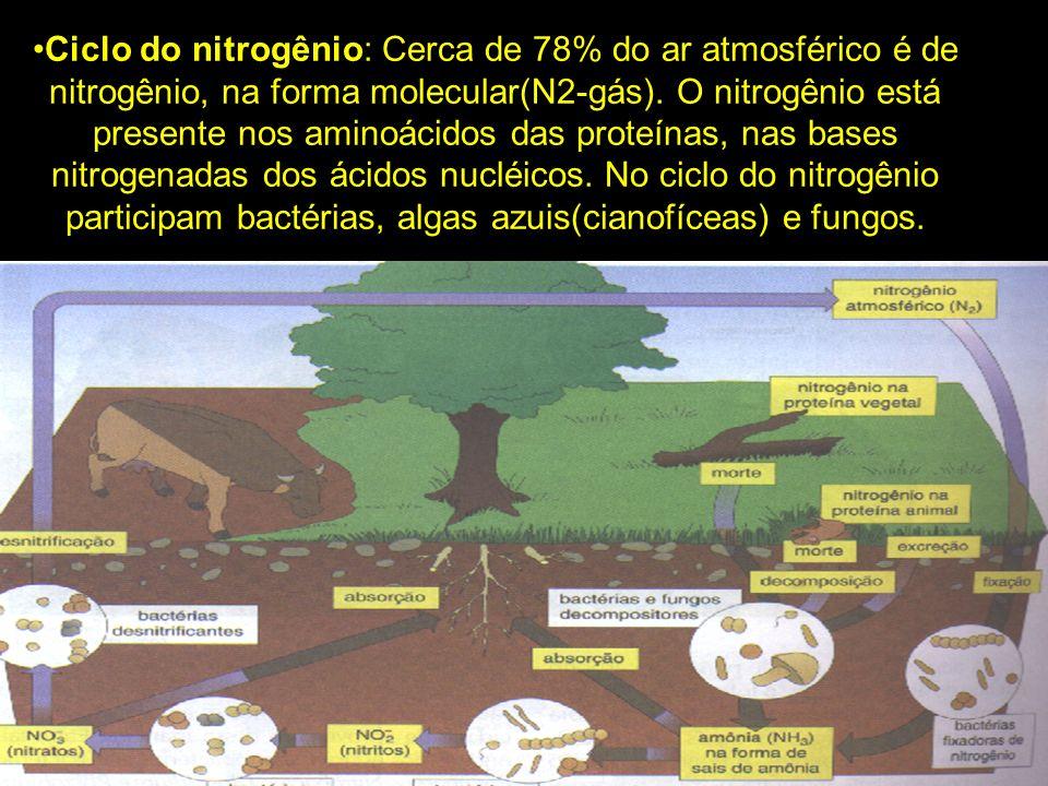Ciclo do nitrogênio: Cerca de 78% do ar atmosférico é de nitrogênio, na forma molecular(N2-gás). O nitrogênio está presente nos aminoácidos das proteí