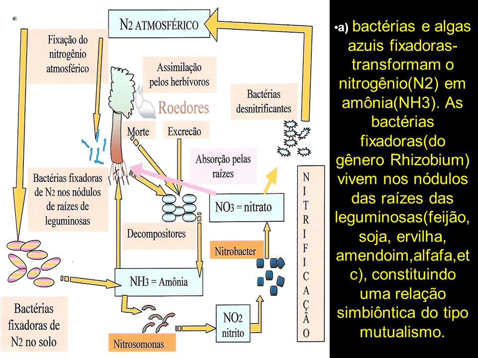 a) bactérias e algas azuis fixadoras- transformam o nitrogênio(N2) em amônia(NH3). As bactérias fixadoras(do gênero Rhizobium) vivem nos nódulos das r
