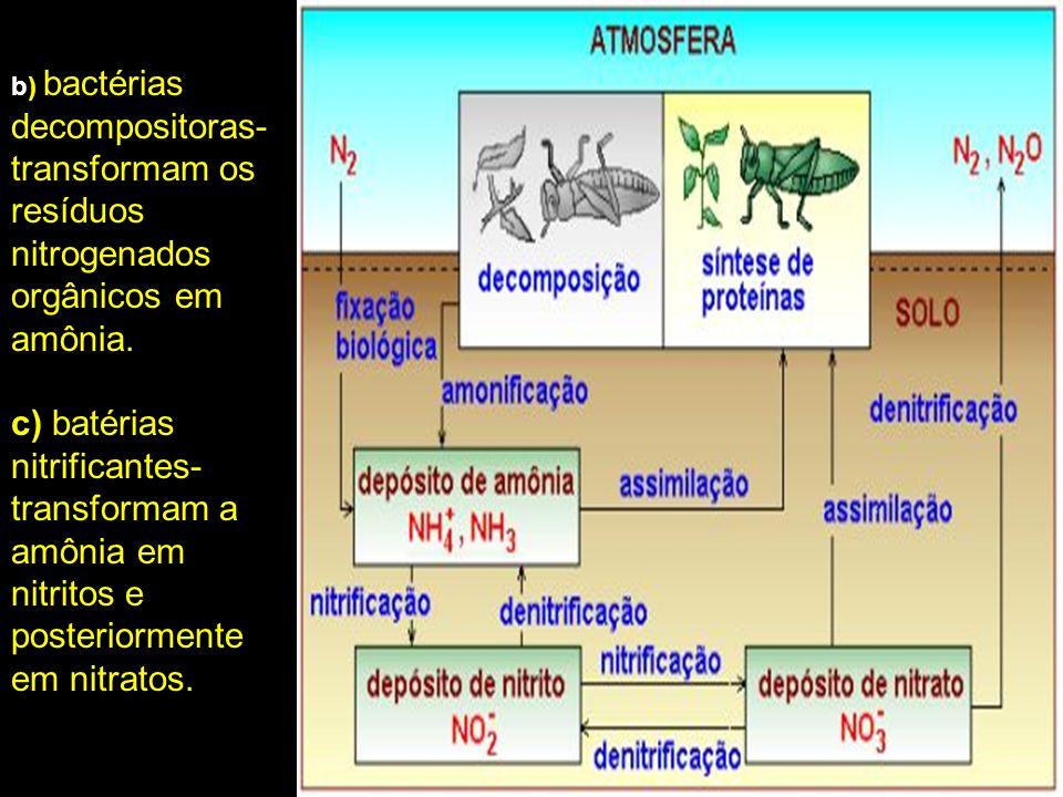 b) bactérias decompositoras- transformam os resíduos nitrogenados orgânicos em amônia. c) batérias nitrificantes- transformam a amônia em nitritos e p