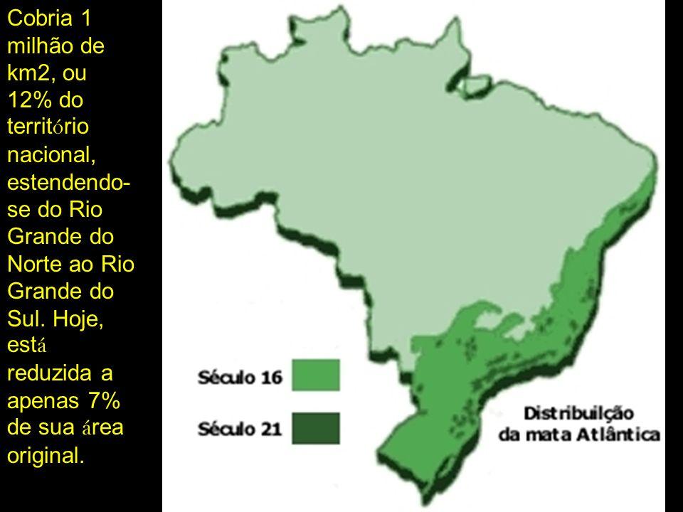 Cobria 1 milhão de km2, ou 12% do territ ó rio nacional, estendendo- se do Rio Grande do Norte ao Rio Grande do Sul. Hoje, est á reduzida a apenas 7%