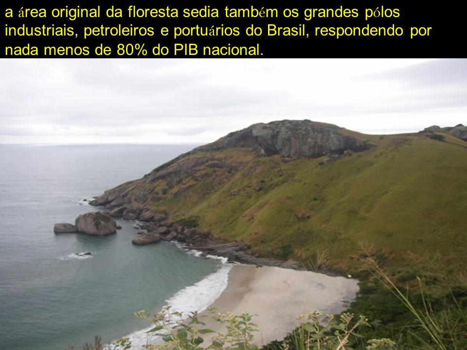 a á rea original da floresta sedia tamb é m os grandes p ó los industriais, petroleiros e portu á rios do Brasil, respondendo por nada menos de 80% do