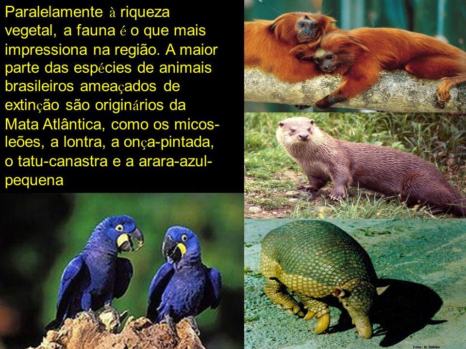 Paralelamente à riqueza vegetal, a fauna é o que mais impressiona na região. A maior parte das esp é cies de animais brasileiros amea ç ados de extin