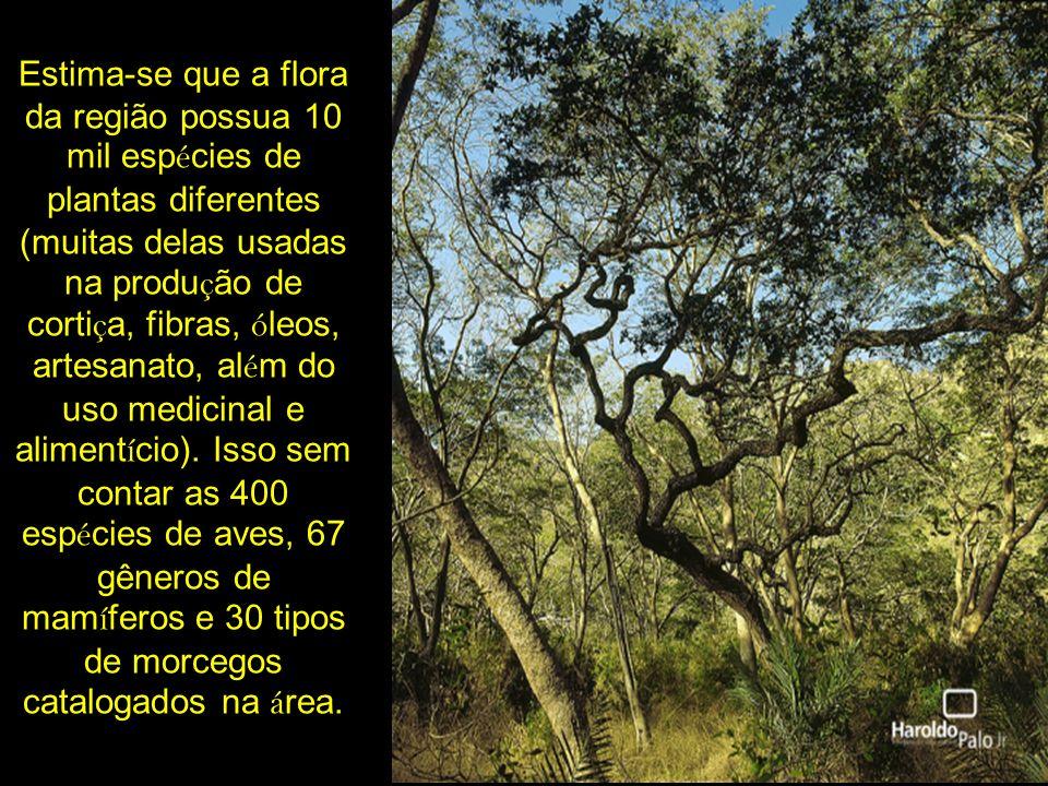 Estima-se que a flora da região possua 10 mil esp é cies de plantas diferentes (muitas delas usadas na produ ç ão de corti ç a, fibras, ó leos, artesa