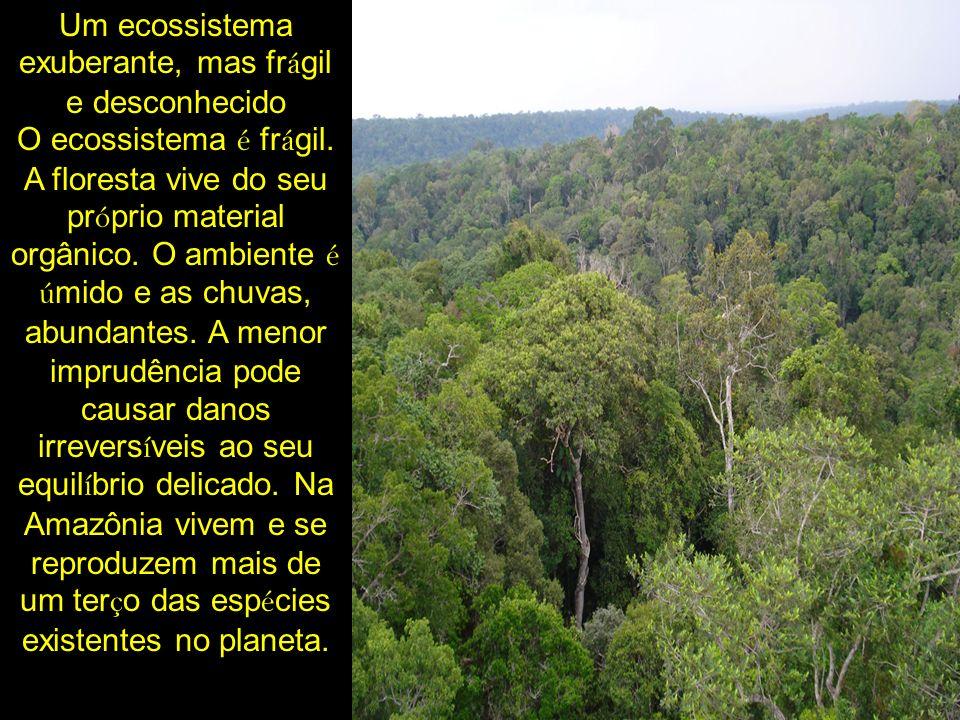 Um ecossistema exuberante, mas fr á gil e desconhecido O ecossistema é fr á gil. A floresta vive do seu pr ó prio material orgânico. O ambiente é ú mi