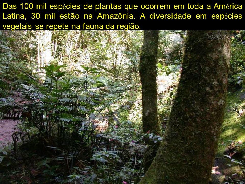 Das 100 mil esp é cies de plantas que ocorrem em toda a Am é rica Latina, 30 mil estão na Amazônia. A diversidade em esp é cies vegetais se repete na