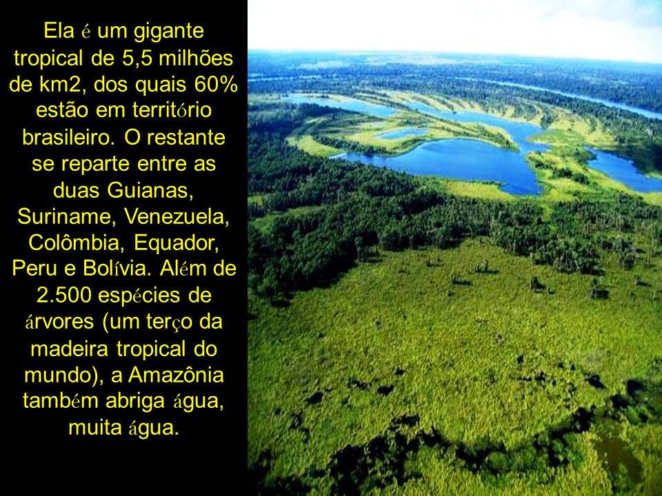 Ela é um gigante tropical de 5,5 milhões de km2, dos quais 60% estão em territ ó rio brasileiro. O restante se reparte entre as duas Guianas, Suriname