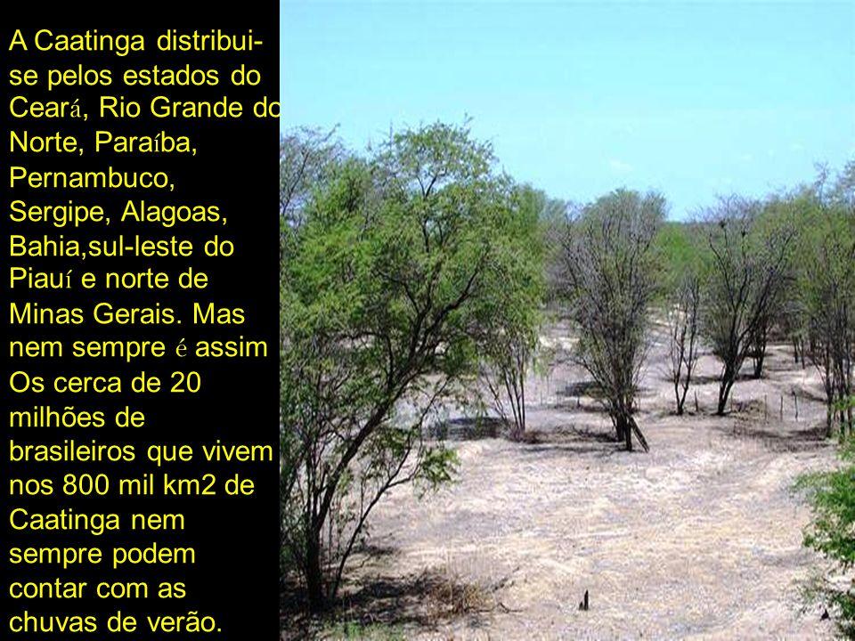 A Caatinga distribui- se pelos estados do Cear á, Rio Grande do Norte, Para í ba, Pernambuco, Sergipe, Alagoas, Bahia,sul-leste do Piau í e norte de M