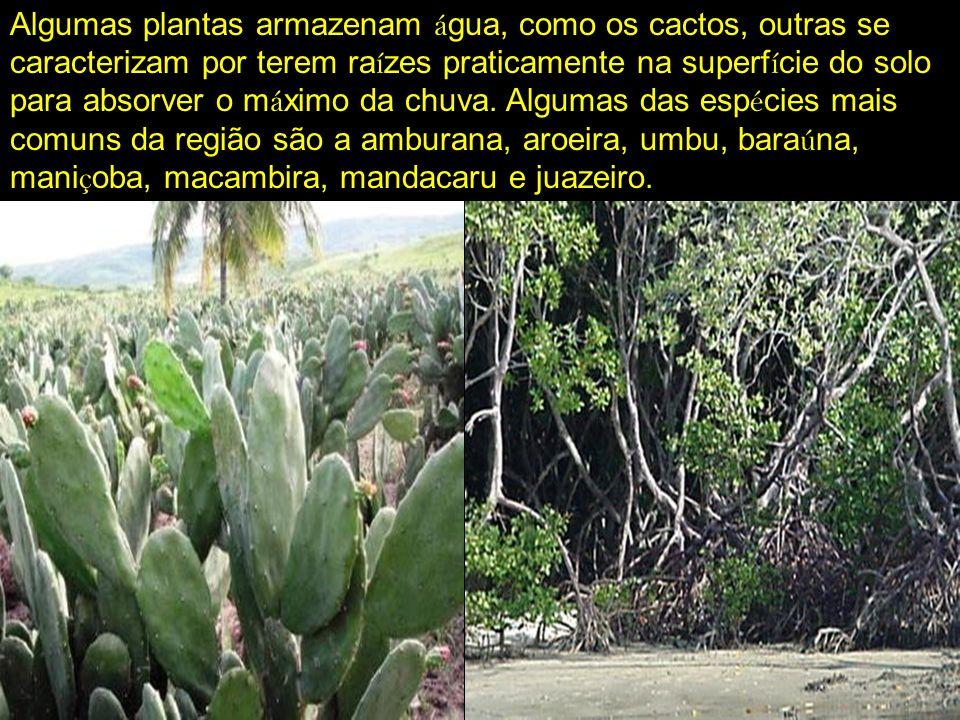 Mata Atlântica: é uma das florestas tropicais mais amea ç adas do mundo.