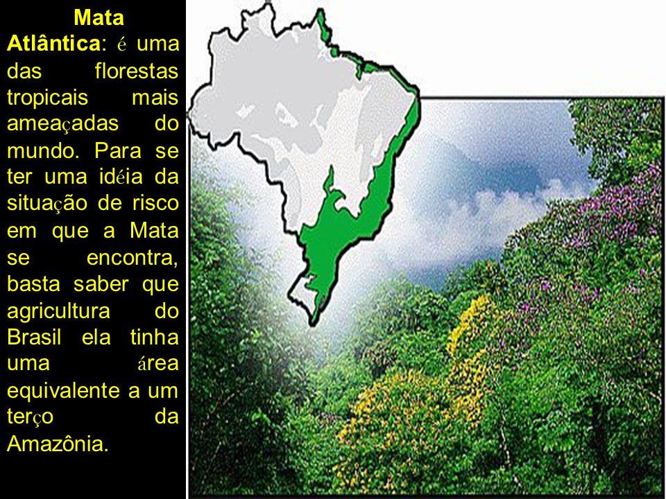 Mata Atlântica: é uma das florestas tropicais mais amea ç adas do mundo. Para se ter uma id é ia da situa ç ão de risco em que a Mata se encontra, bas