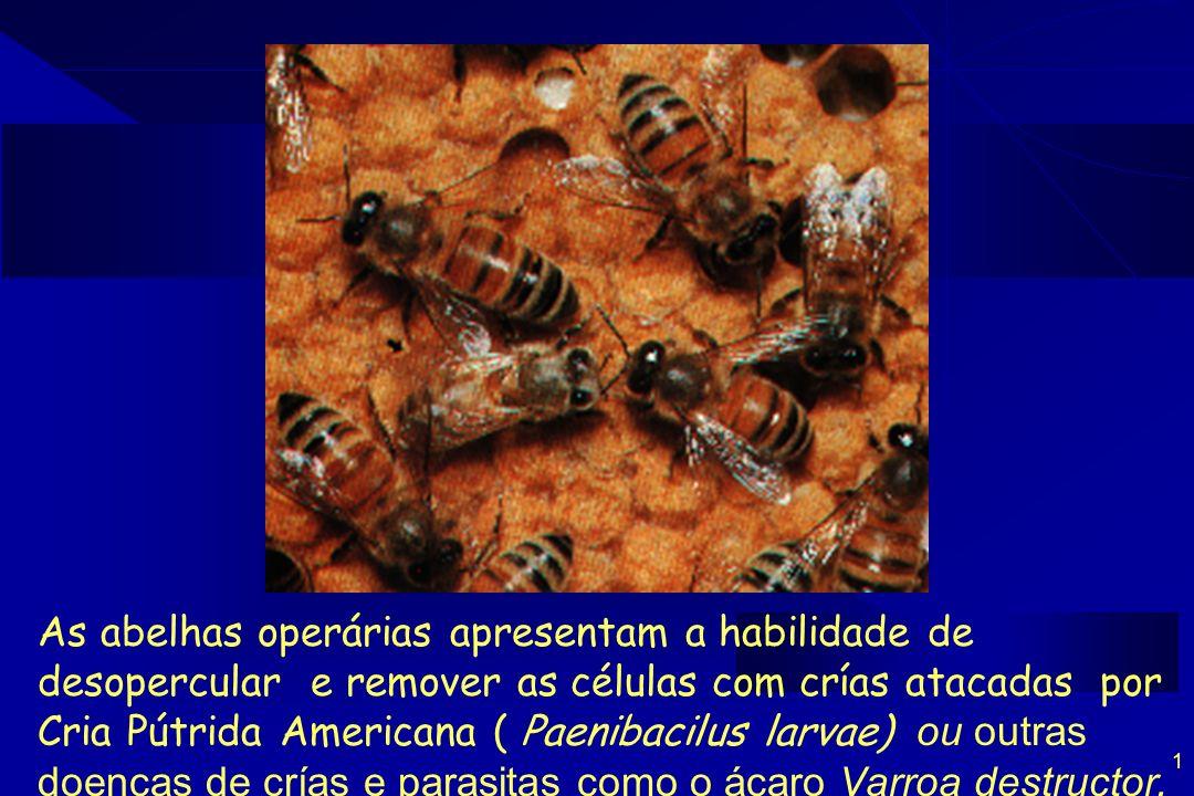 2 Controle biológico da doença das crías por meio do Comportamento Higiênico : A remoclão de larvas doentes sem esporos (antes de ter consistência filamentosa) As abelhas não se contaminam Não transmitem os esporos para crías sadias