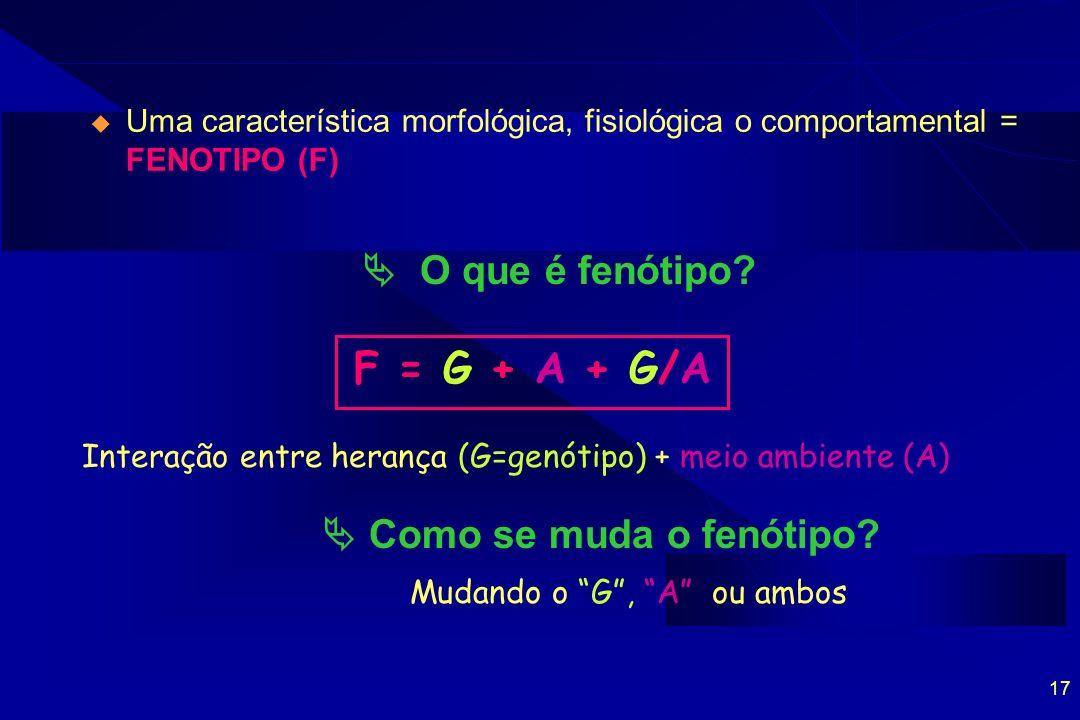 17 Uma característica morfológica, fisiológica o comportamental = FENOTIPO (F) O que é fenótipo? F = G + A + G/A Interação entre herança (G=genótipo)