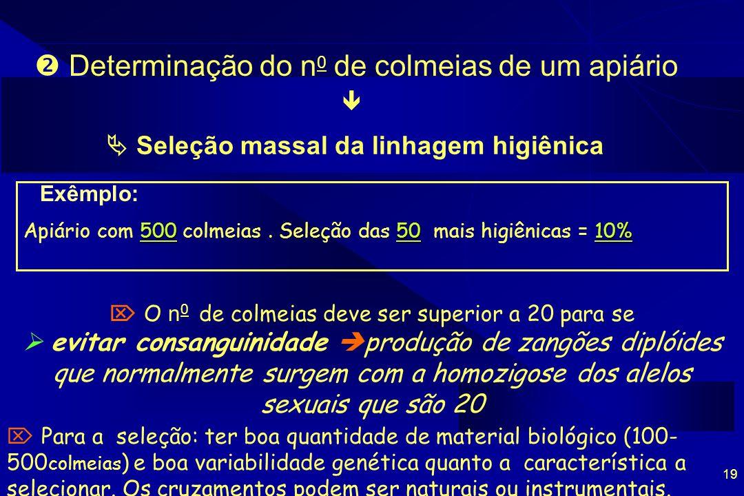 19 Determinação do n 0 de colmeias de um apiário Seleção massal da linhagem higiênica Exêmplo: 5005010% Apiário com 500 colmeias. Seleção das 50 mais