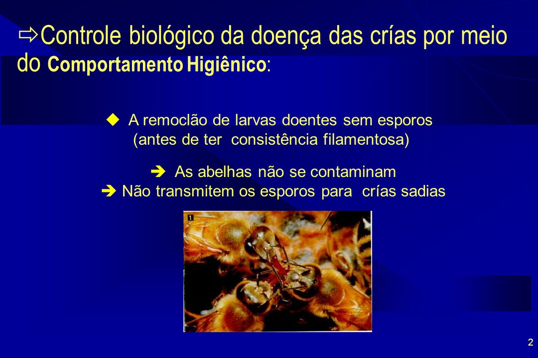 23 Micro Seringa para múltiplas inseminaçoes (Francoy & Gonçalves, 2002)