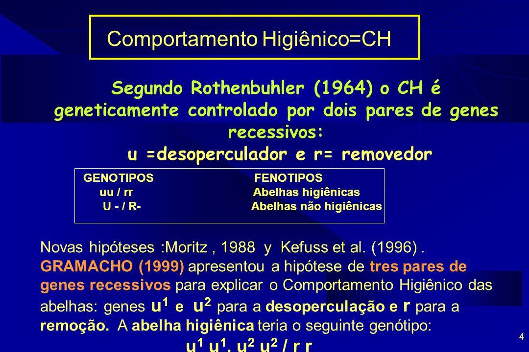 4 Comportamento Higiênico=CH Segundo Rothenbuhler (1964) o CH é geneticamente controlado por dois pares de genes recessivos: u =desoperculador e r= re