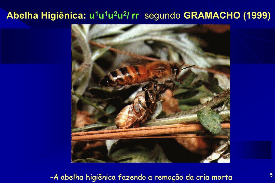 AGRADECIMENTOS Governo do Estado do Rio Grande do Norte