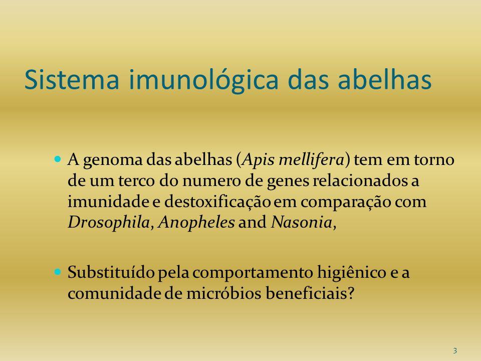 3 Sistema imunológica das abelhas A genoma das abelhas (Apis mellifera) tem em torno de um terco do numero de genes relacionados a imunidade e destoxi