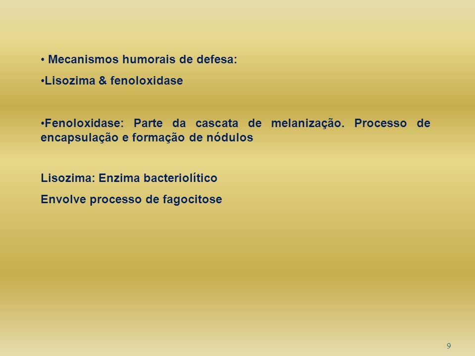 9 Mecanismos humorais de defesa: Lisozima & fenoloxidase Fenoloxidase: Parte da cascata de melanização. Processo de encapsulação e formação de nódulos