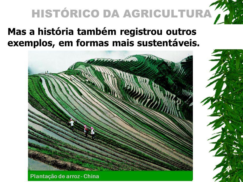 HISTÓRICO DA AGRICULTURA Mas a hist ó ria tamb é m registrou outros exemplos, em formas mais sustent á veis. Plantação de arroz - China
