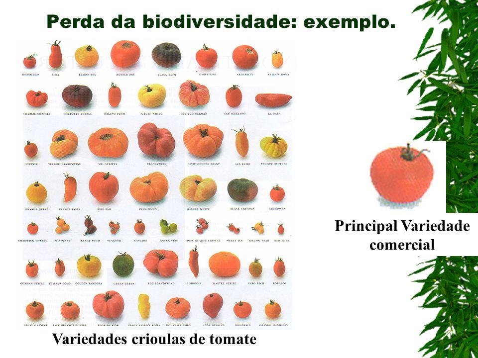 Perda da biodiversidade: exemplo. Variedades crioulas de tomate Principal Variedade comercial