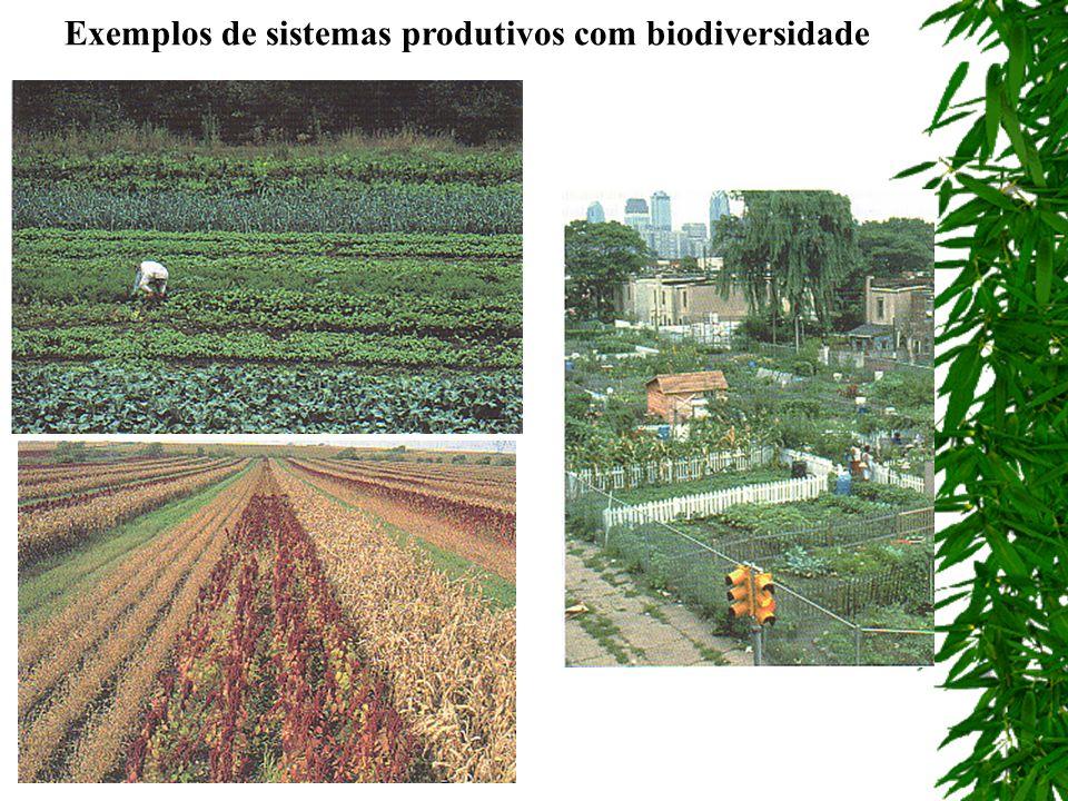 Exemplos de sistemas produtivos com biodiversidade