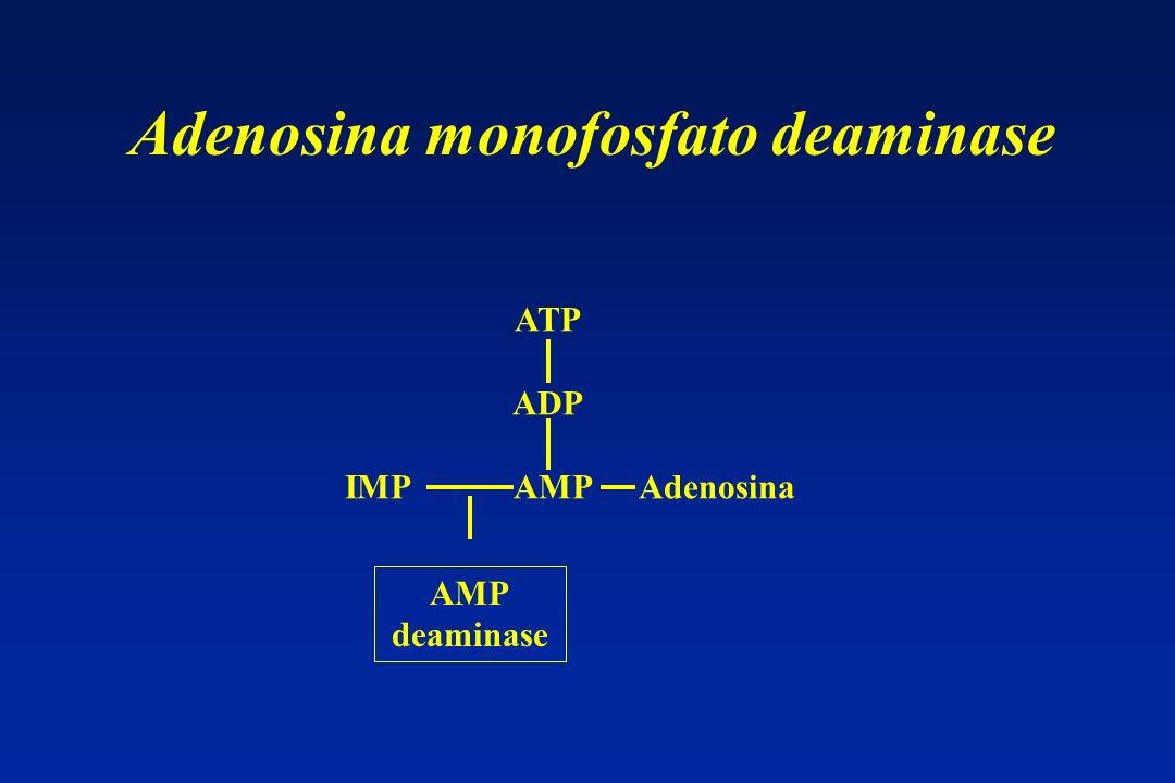 Adenosina monofosfato deaminase ATP ADP IMP AMP Adenosina AMP deaminase