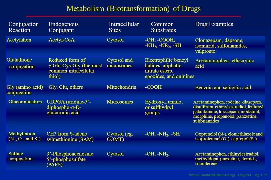 Metabolism (Biotransformation) of Drugs Conjugation Reaction Endogenous Conjugant Intracellular Sites Common Substrates Drug Examples Acetylation Acet
