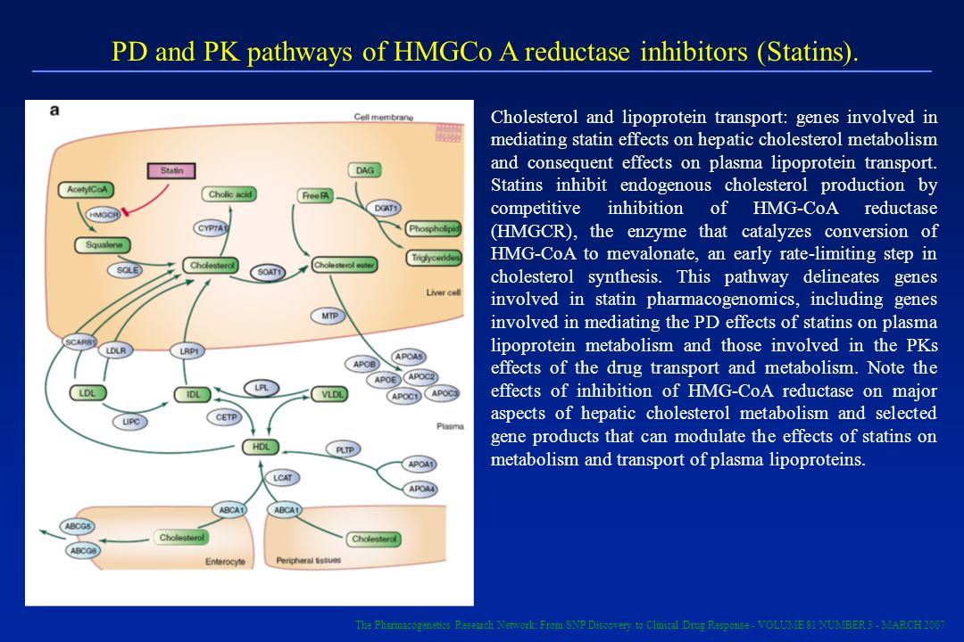 PD and PK pathways of HMGCo A reductase inhibitors (Statins). Cholesterol and lipoprotein transport: genes involved in mediating statin effects on hep