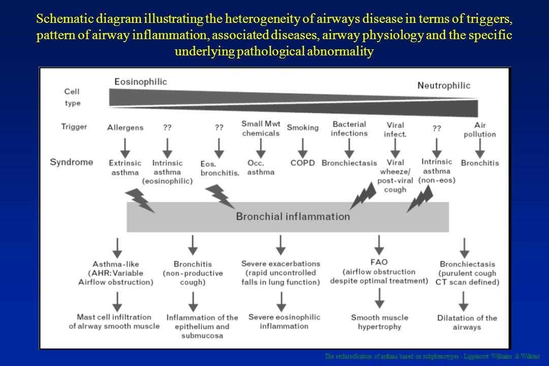 Schematic diagram illustrating the heterogeneity of airways disease in terms of triggers, pattern of airway inflammation, associated diseases, airway