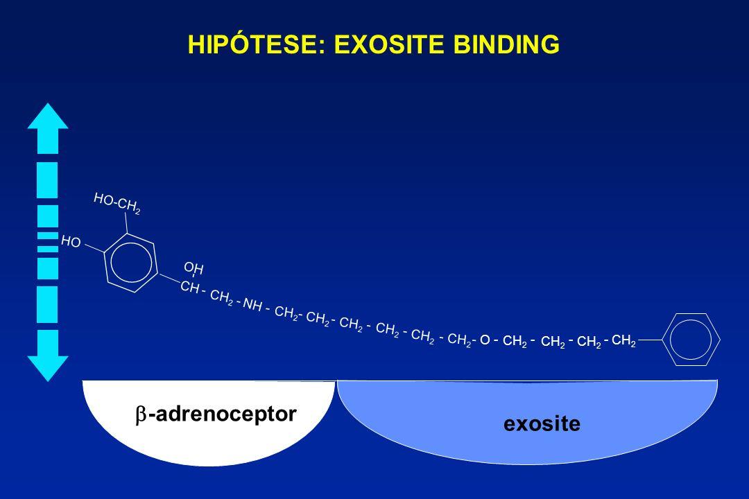-adrenoceptor exosite - CH HO HO-CH 2 - OH - - CH 2 NH - CH 2 - - - - - O --- - HIPÓTESE: EXOSITE BINDING