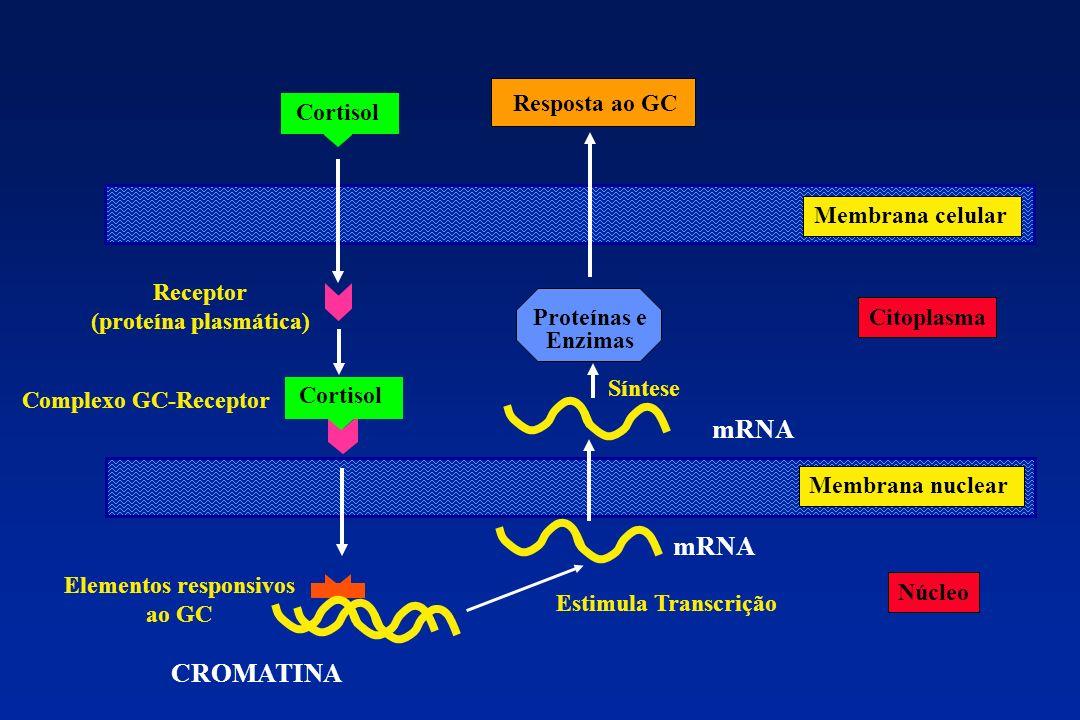 Citoplasma Núcleo Membrana celular Membrana nuclear Proteínas e Enzimas Cortisol Receptor (proteína plasmática) Elementos responsivos ao GC Complexo G