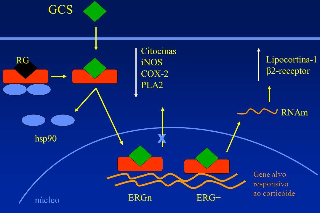 GCS RG hsp90 núcleo ERGnERG+ Gene alvo responsivo ao corticóide X Citocinas iNOS COX-2 PLA2 RNAm Lipocortina-1 -receptor