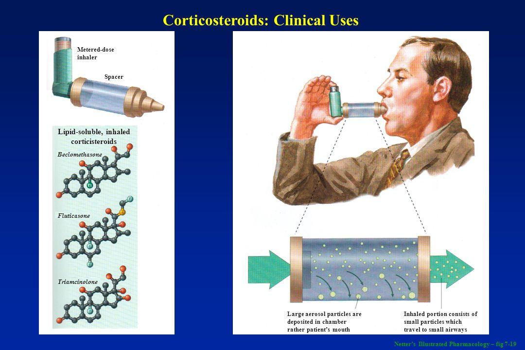 Lipid-soluble, inhaled corticisteroids Beclomethasone Fluticasone Triamcinolone Spacer Metered-dose inhaler Large aerosol particles are deposited in c