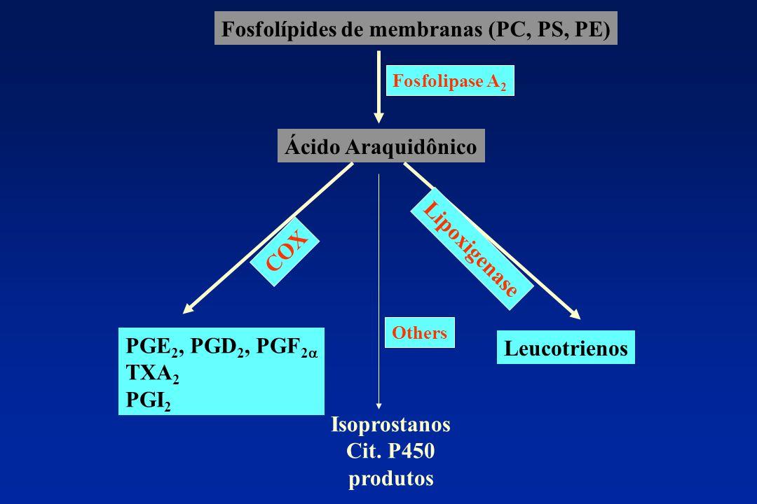 Fosfolípides de membranas (PC, PS, PE) Ácido Araquidônico Fosfolipase A 2 COX Lipoxigenase PGE 2, PGD 2, PGF 2 TXA 2 PGI 2 Leucotrienos Others Isopros