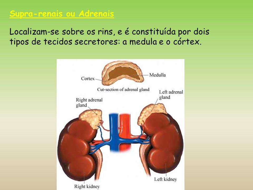 Supra-renais ou Adrenais Localizam-se sobre os rins, e é constituída por dois tipos de tecidos secretores: a medula e o córtex.